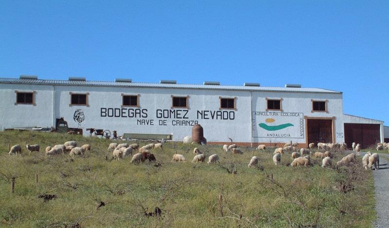 シェリー酒の醸造所とぶどう畑には羊の群れ