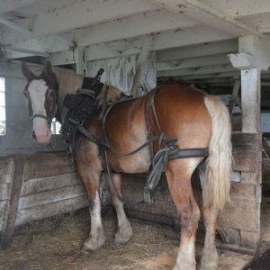 家族でもある馬を紹介してくれた彼